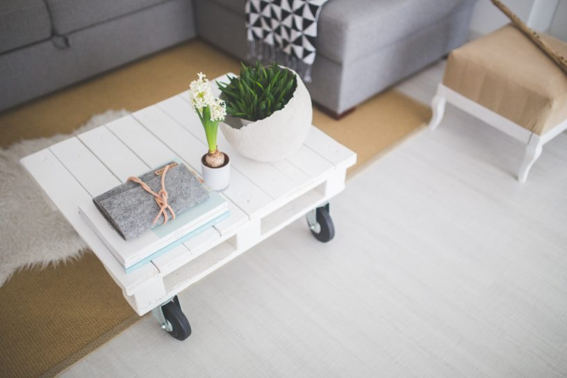 Indoor Plant Hire - Plant Care Tips